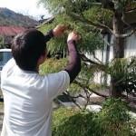 退職後に庭の仕事をしたい!必要な資格や道具、費用について
