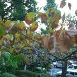 暑さ、寒さに弱い木の管理方法