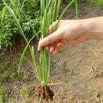 お庭の雑草の除草について