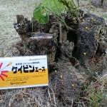 お庭の木(クズ)を枯らすのにオススメ!専用の除草剤ケイピンエース