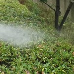 庭木を綺麗に管理するための消毒(薬剤散布)について