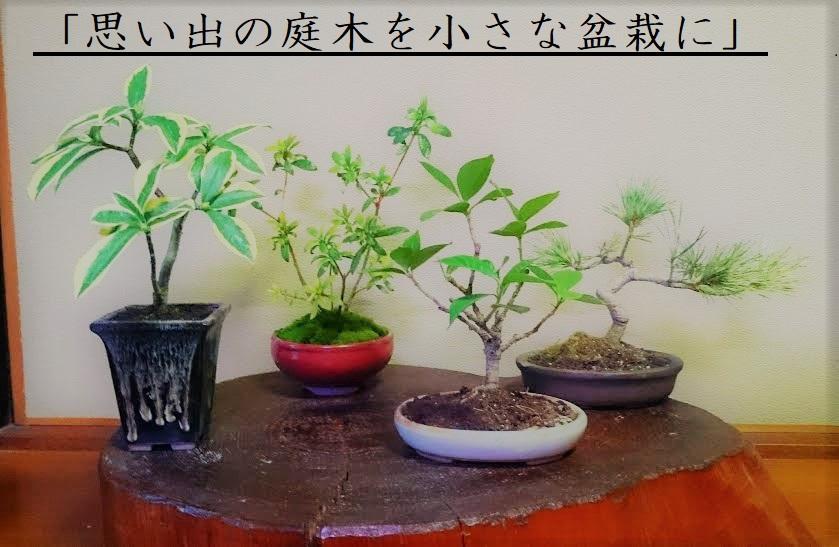 メモリアル盆栽 (2)図