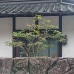 庭木の剪定方法(基本)