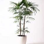 観葉植物の育て方 ポイント4選