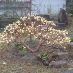 庭木の育て方・作り方(剪定によるポイントや方法、木の経過観察)
