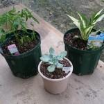 植物の植え替えにおすすめの方法!タイミングやポイント、管理について