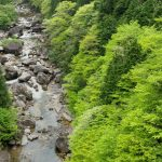森林浴はストレス発散におすすめ