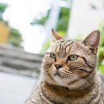 猫よけ対策におすすめな方法(庭の困りごと)