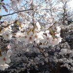 お庭の思い出物語  第3話 (庭木を盆栽に)