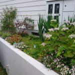 花壇の草花が弱る(枯れる)理由と元気に育てるオススメの方法