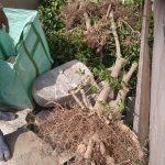 庭から出る剪定ゴミなどの処分方法のポイント