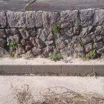 石垣から草や木が!石垣を綺麗に管理するオススメの方法