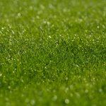 芝生のオススメ管理(メンテナンス)方法と道具について